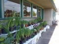 Plant-and-Garden-Sale1